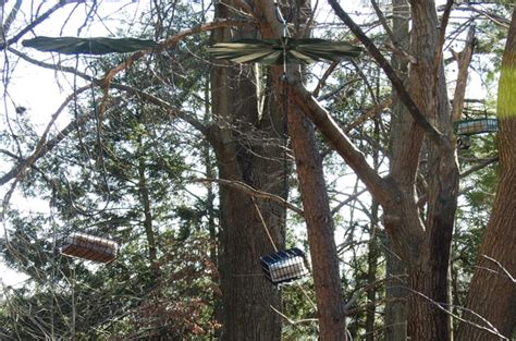 where to hang a suet feeder birdseed binoculars