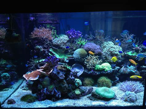 aquarium sur mesure drome aquarium sur mesure en s paration oc an d interieur aquarium sur