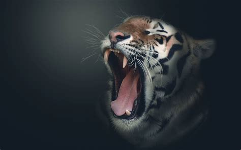 Digital Tiger Wallpaper by Hd 3d Hd Wallpapers Tiger On Hd Wallpaper With 3d Hd
