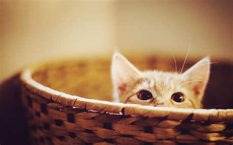 แมว Cat กว่า 40 ภาพ
