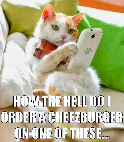 Cheezburger Cat Meme - cheezburger cat meme pictures to pin on pinterest pinsdaddy