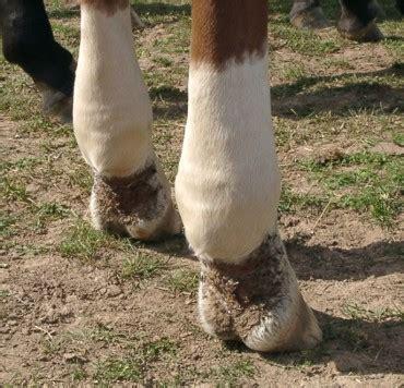 wenn pferde abmagern dr susanne weyrauch