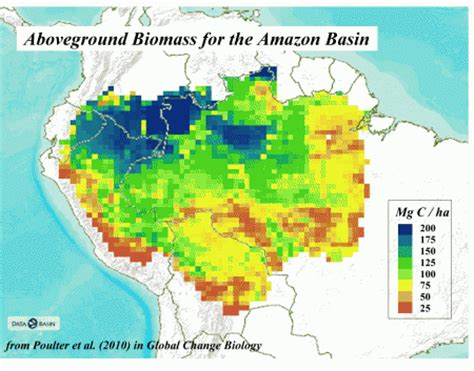 forest inventory  monitoring   amazon global