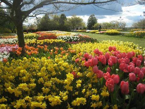 tulips in picture of longwood gardens kennett