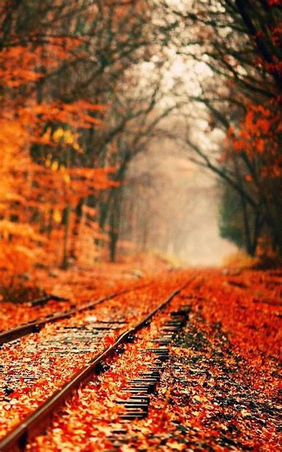 Autumn Wallpapers Android Apkpure Poster Type Upgrade