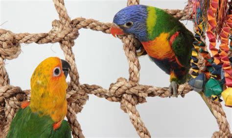 bird perches  climbing ropes hari