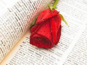 Comment Faire Une Rose En Papier Facilement : construction en papier facile ~ Nature-et-papiers.com Idées de Décoration