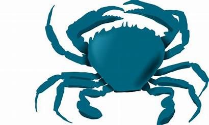 Crab Maryland Clipart Louisiana Clip Bluecrab Vector