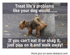 Funny Dog Quotes About Life