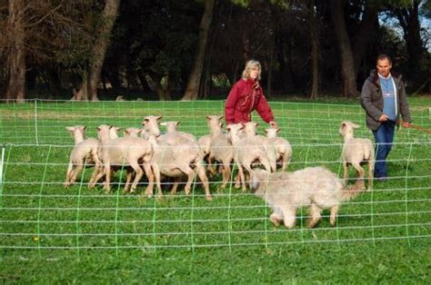 chambre agriculture 74 jean michel jolly berger éleveur et formateur agréé pour