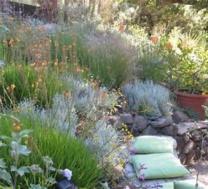 Jardin En Pente Raide : santolina chamaecyparissus plantation entretien propri t s ~ Melissatoandfro.com Idées de Décoration