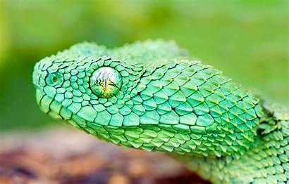 Snake Head Scales Reptile Eyes Telegram вконтакте