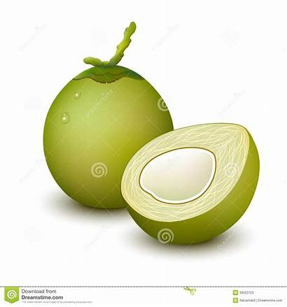 Coconut Young Fruit Clipart Vector Whole Background