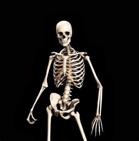 Skeleton Meme Skeletons Image Gallery Your Meme
