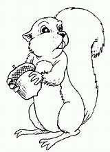Coloring Print Squirrel Pages sketch template