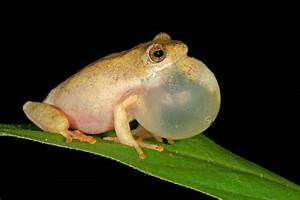 Top Ten Awesome Facts About Frogs   Earth Rangers Wild ...