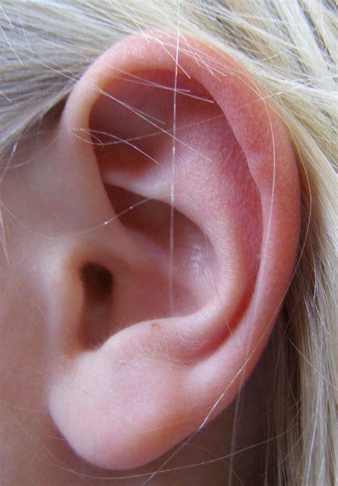 iii a anatomie et d 233 finition de l oreille humaine