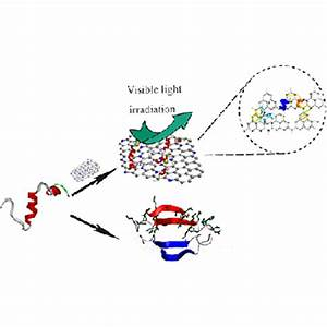 Prolonging the plasma circulation of proteins by nano ...