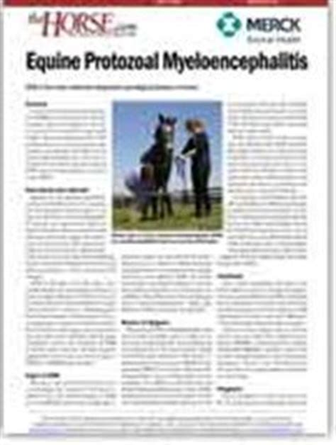 cloning facts sheet equine cloning pinterest horses other and facts