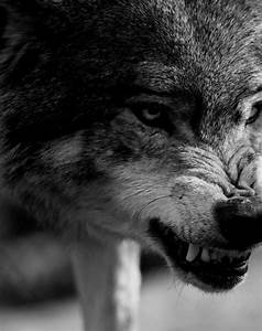 snarled warning | Don't Mess with Me | Pinterest