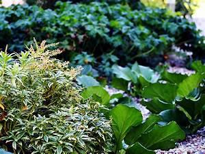 Pflanzen Für Nordseite : vorgarten nordseite pflanzen wohn design ~ Frokenaadalensverden.com Haus und Dekorationen