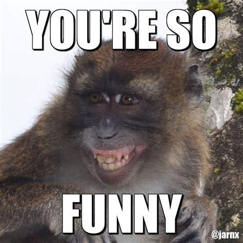 You Re Funny Meme - monkey memes you re so funny picsmine
