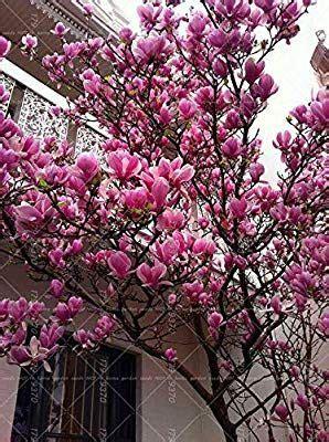 dekosteine für garten shopmeeko 10 st 195 œcke magnolia licht duftenden garten baum magnolia blumen f 195 188 r hausgarten diy