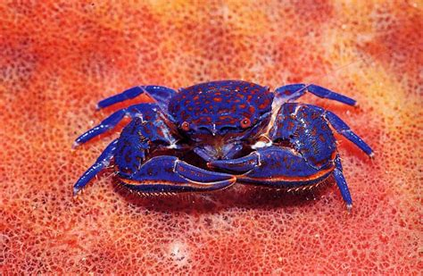 crab colors pacific island books nature
