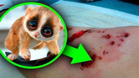 animales tiernos pero  son extremadamente peligrosos