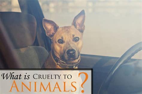 larimer county cruelty  animals lawyer animal abuse