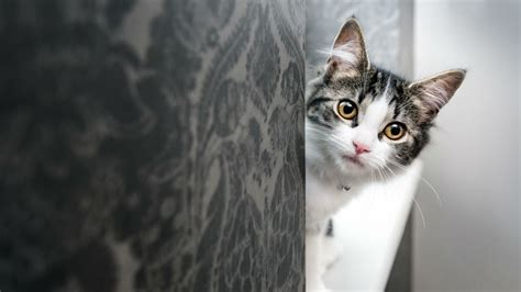 Do Cats Understand Their Own Name? | Mental Floss