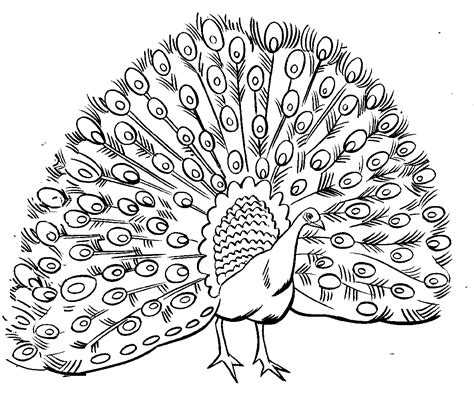 peacock coloring pages for adults coloring peacock feather coloring pages