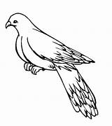 Pigeon Pages Coloring Printable Template Bestcoloringpagesforkids Results sketch template