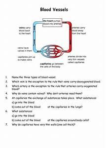 Blood Vessels By Teach Biology