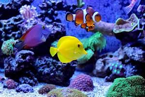 Aquarium Fische Süßwasser Liste : biologische gleichgewicht im aquarium tierglueck haustierratgeber ~ Watch28wear.com Haus und Dekorationen