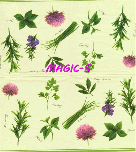 herbes cuisine deco cuisine herbes aromatiques accueil design et mobilier