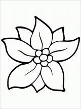 Flower Coloring Jasmine Pages Printable Unique Print Sheet Getcolorings sketch template