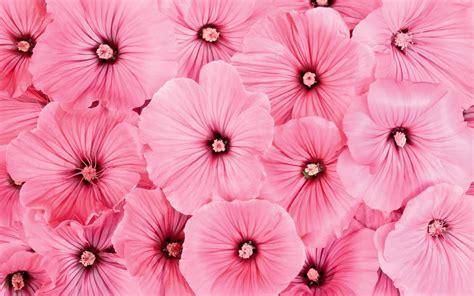 pink flower wallpapers pink flowers wallpapers