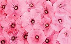 wallpapers: Pink Flowers Wallpapers