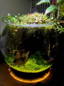 Planted Fish Bowl Aquarium