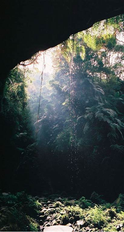 Cave Bat Iphone Ecosystem Jungle Tropical Wallpapers