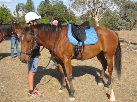 bloodlines horse quarter registered gelding horsezone