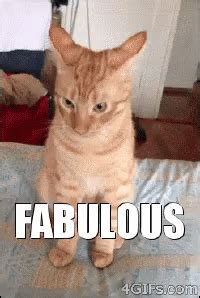 fabulous cat gifs tenor