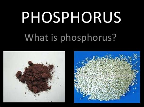 what does phosphorus do for plants phosphoros cycle by james and melissa