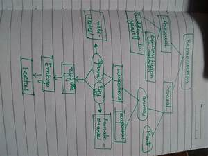Reproduction Chapter Concept Map   Mind Map
