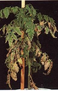 Stickstoffmangel Bei Pflanzen : pflanzenn hrstoffe kleingartenkolonie gr ne aue e v ~ Lizthompson.info Haus und Dekorationen