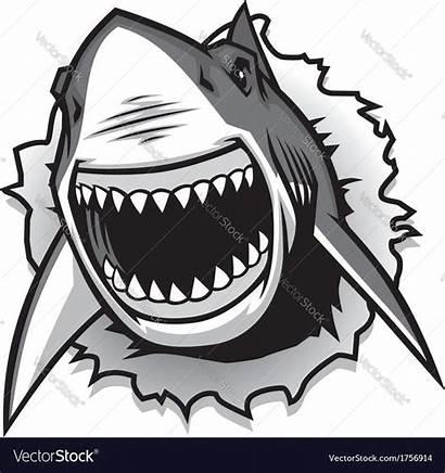 Shark Mouth Sharks Vector Ripping