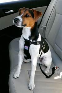 Voiture Pour Chien : harnais chien de voiture auto animaloo ~ Medecine-chirurgie-esthetiques.com Avis de Voitures