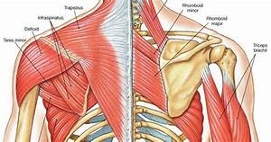 Muscle Identification | A & P | Pinterest | Muscles ...