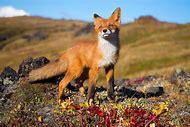 Desktop Wallpaper Wildlife HD Animals